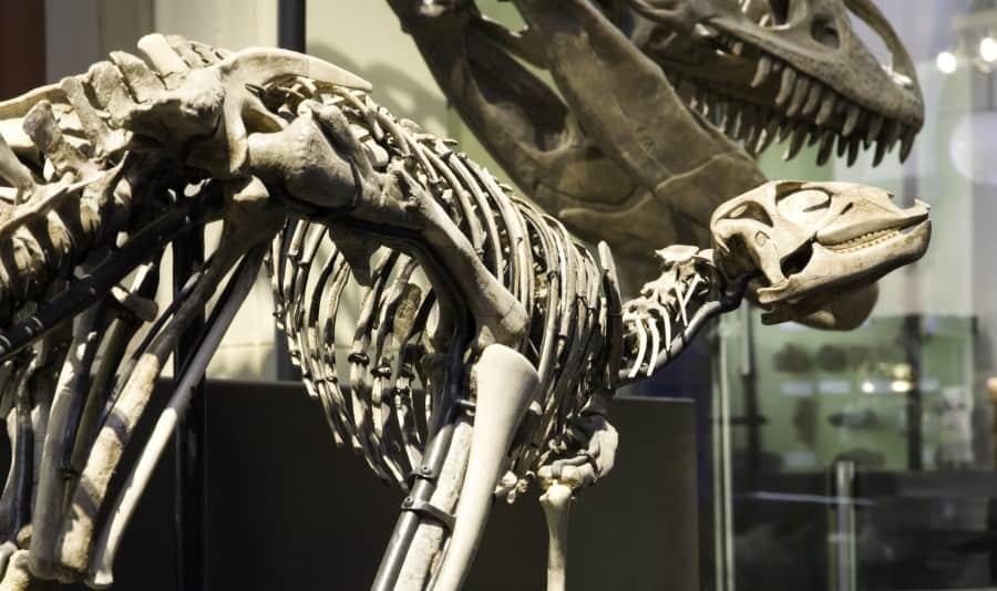 Экспонаты в музее естественных наук в Брюсселе в Бельгии