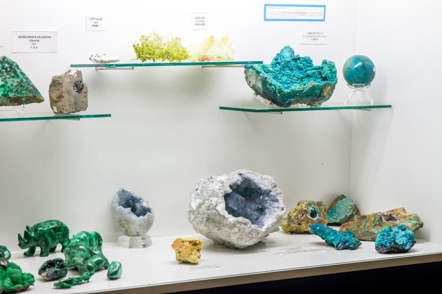 Экспозиция в музее естественных наук в Брюсселе