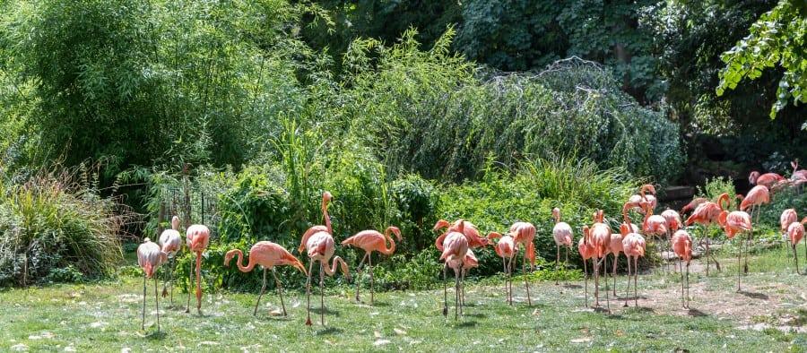 Фламинго в Сафари-парке в Бангкоке