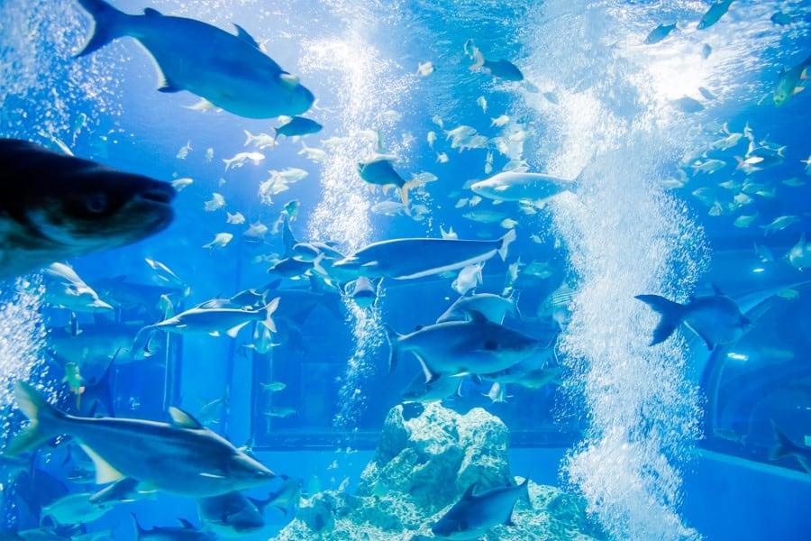 Океанариум в Бангкоке