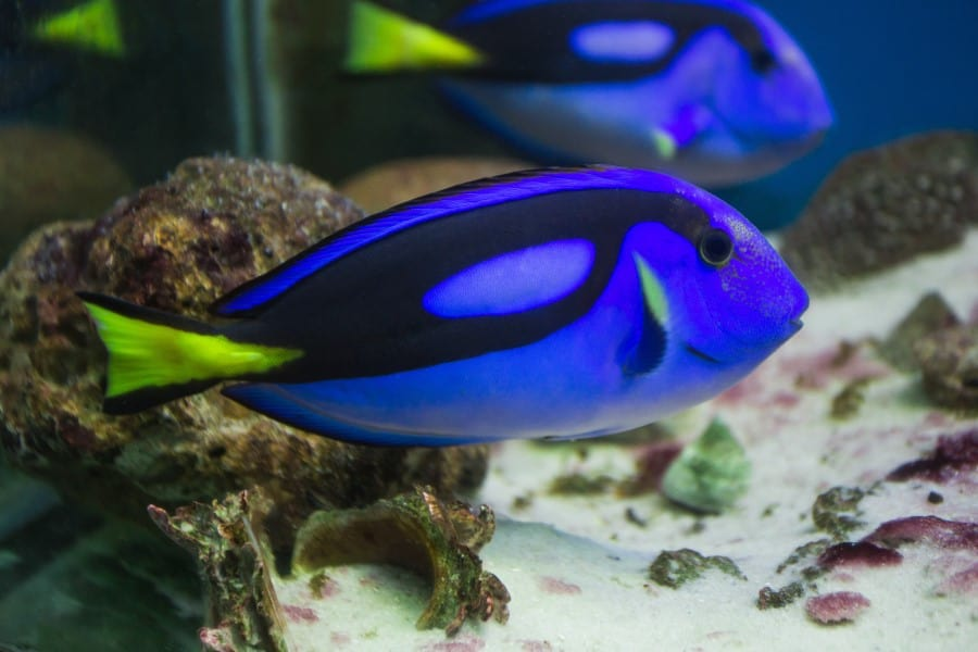 Рыбка в океанариуме в Бангкоке