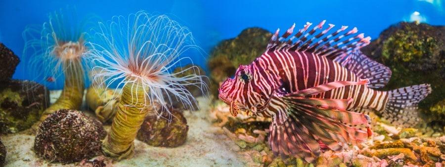 Яркая рыбка в океанариуме в Бангкоке