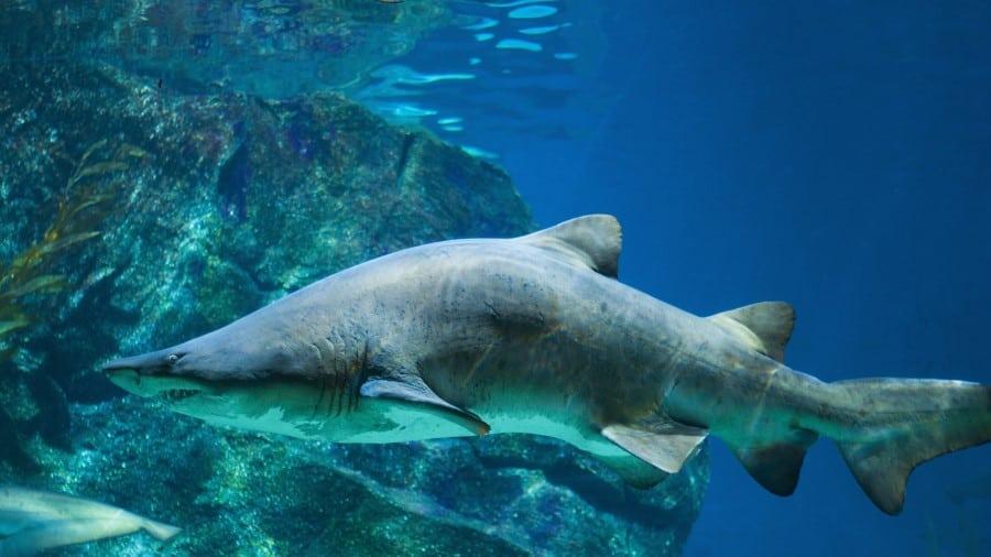 Акула в аквариумах Барселоны