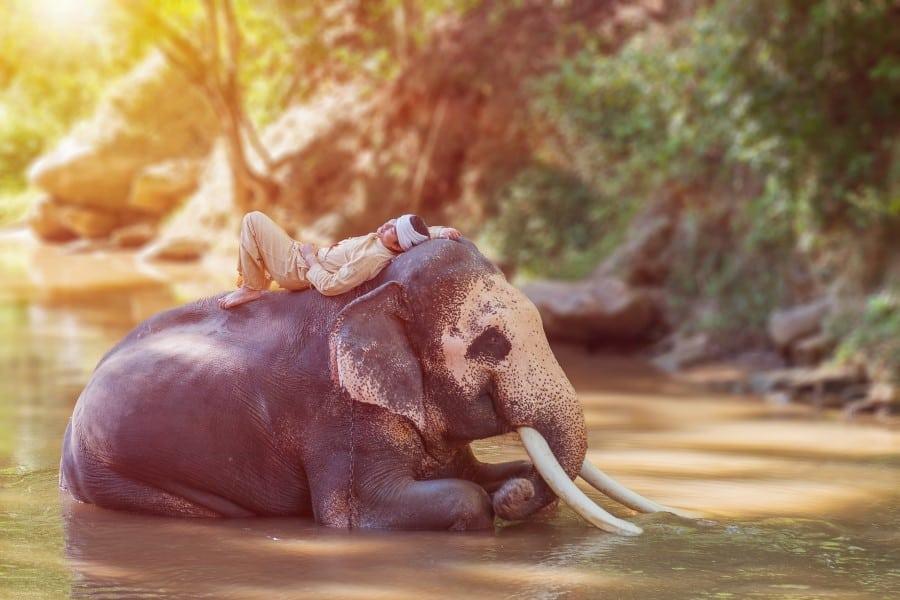Деревня слонов в окрестностях Паттайи