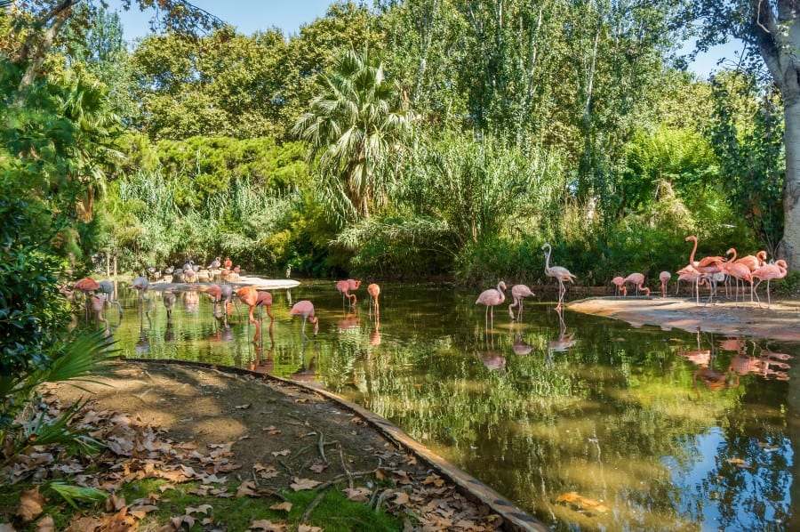Фламинго в зоопарке Барселоны