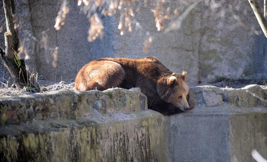 Медведь в Варшавском зоопарке
