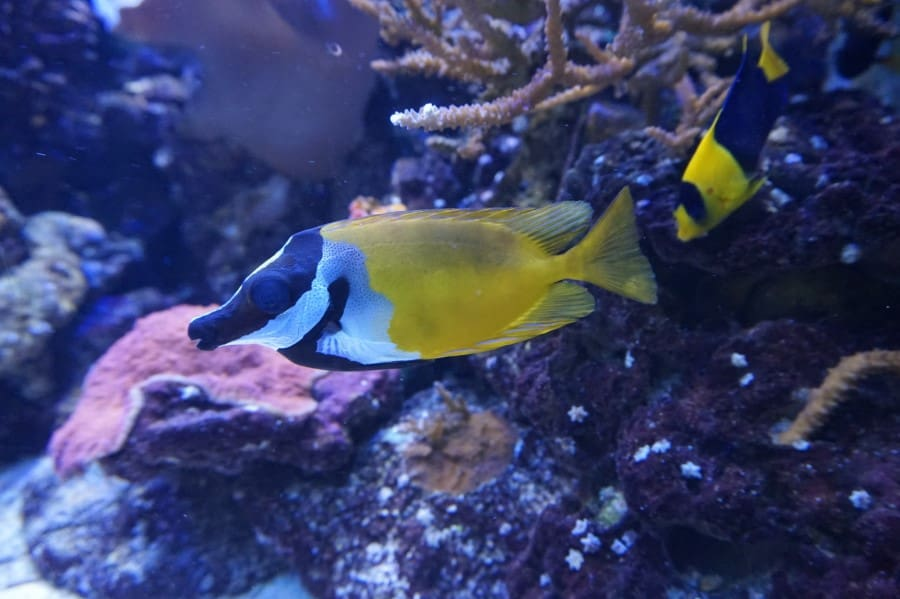 Разноцветные рыбки в аквариуме Барселоны