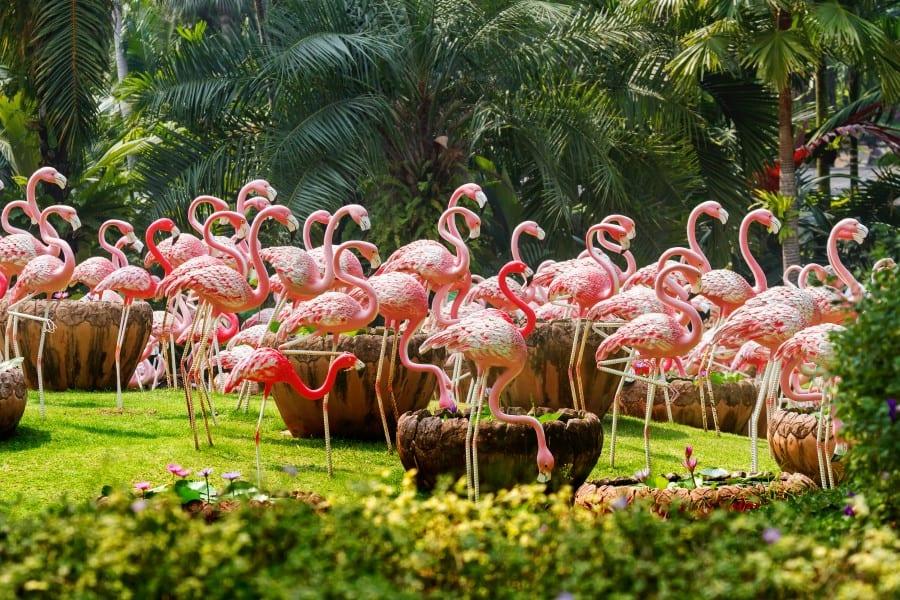 Розовые фламинго на территории парка Нонг Нуч