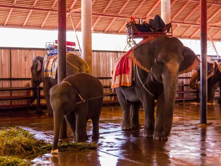 Загон слонов в Парке Нонг Нуч в Паттайе