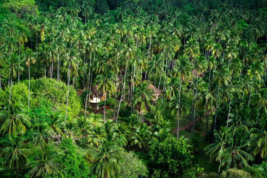 Панорама джунглей